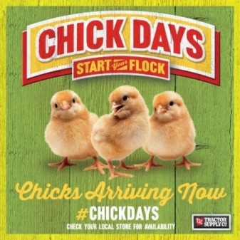 ChickDays_ChickareArriving-450x450